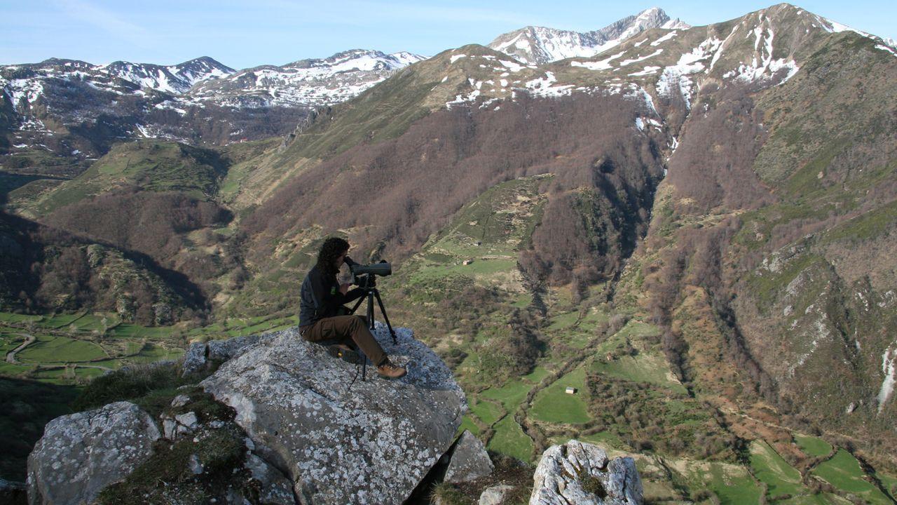 Observacion de fauna salvaje en Somiedo
