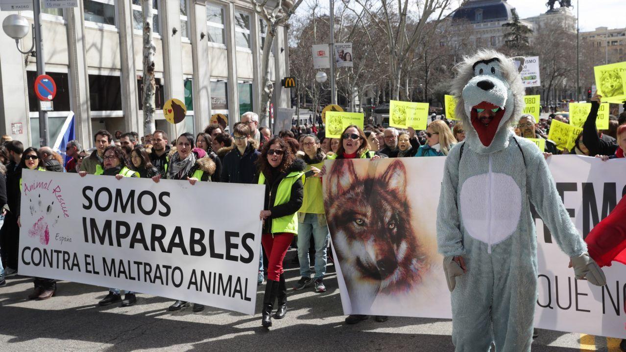 Manifestación convocada por las organizaciones Lobo Marley, Equo, Ecologistas en Acción, WWF y la Alianza Europea para la Conservación del Lobo, con el apoyo de 200 entidades ecologistas y animalistas de España, en apoyo a la conservación del lobo