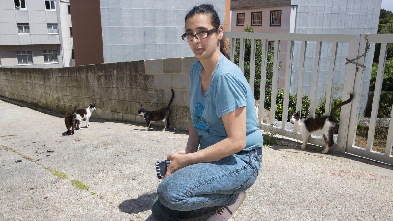 Malante rindió homenaje a Xelucho Abella Chouciño: ¡las imágenes!.Laura cuida y da de comer a varios gatos