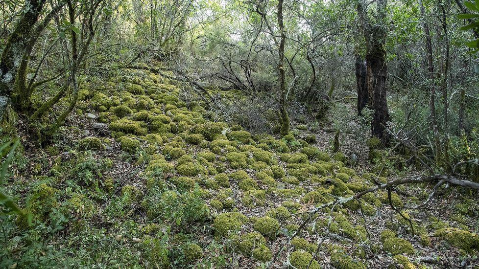 Acumulaciones de piedras aluvión en A Borrén