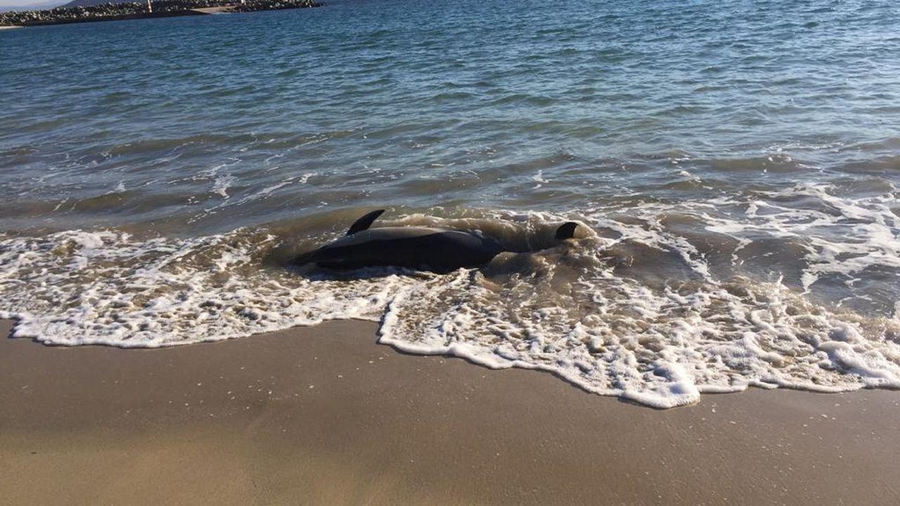 Aparece una foca en Barizo