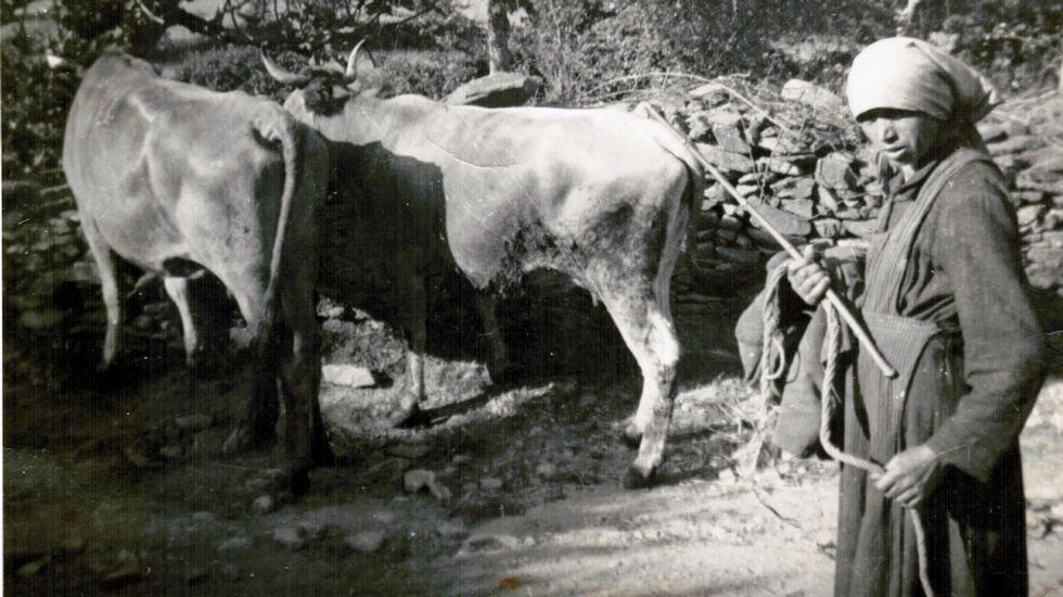 Imaxes da vida diaria en Guntín de Bóveda ao longo do século XX