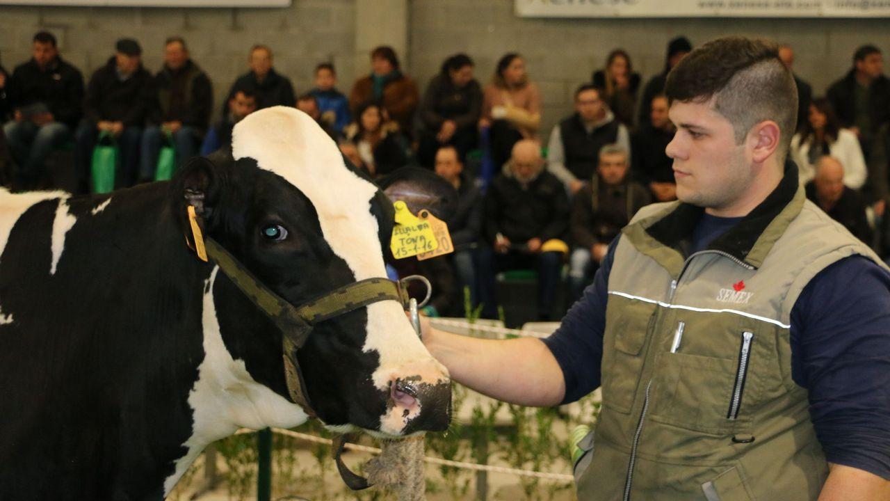 ¡Mira aquí las imágenes de la subasta de vacas de la Semana Gandeira de Mazaricos!