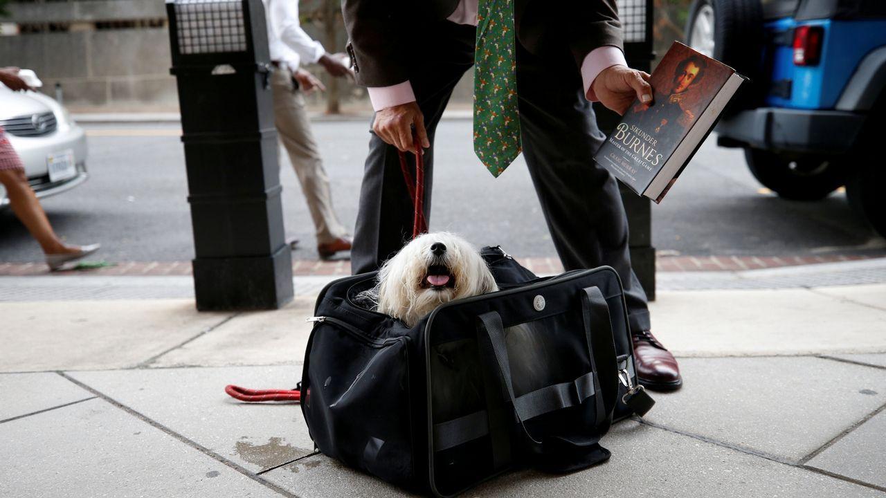 Randy Credico, uno de los miembros que formaron parte del equipo de asesores de campaña de Donald Trump, guarda a su mascota en una mochila para poder entrar a testificar ante un jurado convocado por Robert Mueller en EE.UU.
