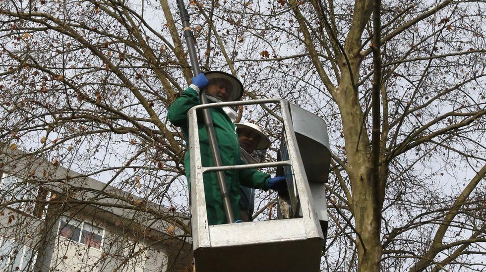 Los trampeos permitieron evitar entre 25.000 y 30.000 nidos de velutina.Manifestación contra la ley mordaza