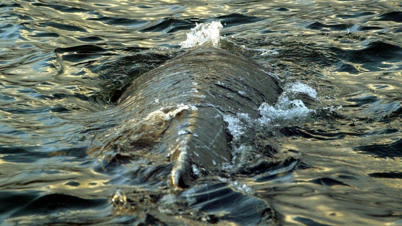 «Era un desastre, era un mar de fuel».La polémica del buceo en apnea llegó al Parlamento Galego