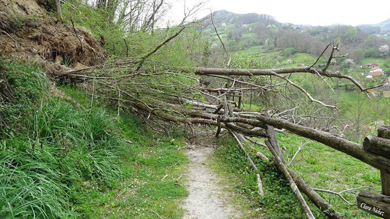 Las imágenes del acto de Pedro Sánchez en Oviedo.Un árbol corta un camino en Turón