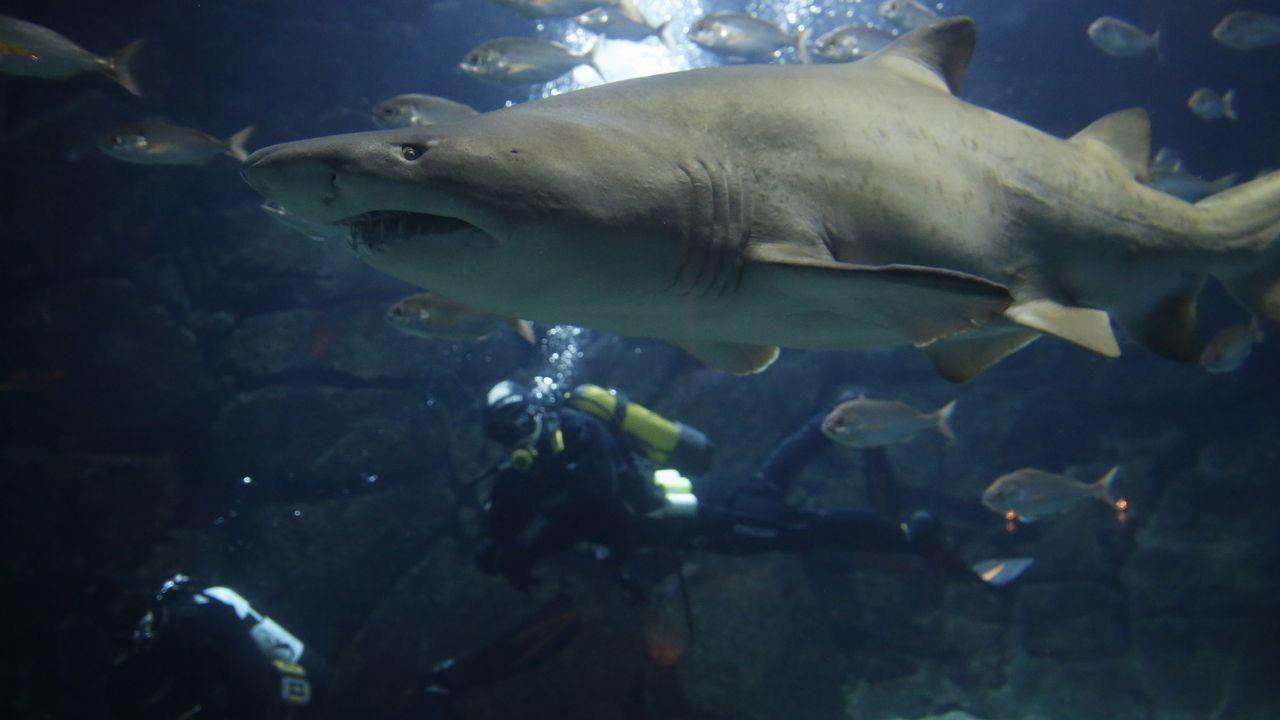 Y el tiburón Gastón salió de caza.François Cluzet, en una imagen del filme de Jean Becker«El collar rojo».
