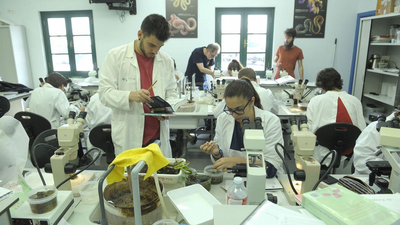 Un total de dieciésis alumnos del máster de Bioloxía Mariña han aprendido a recoger y clasificar muestras en la estación de A Graña