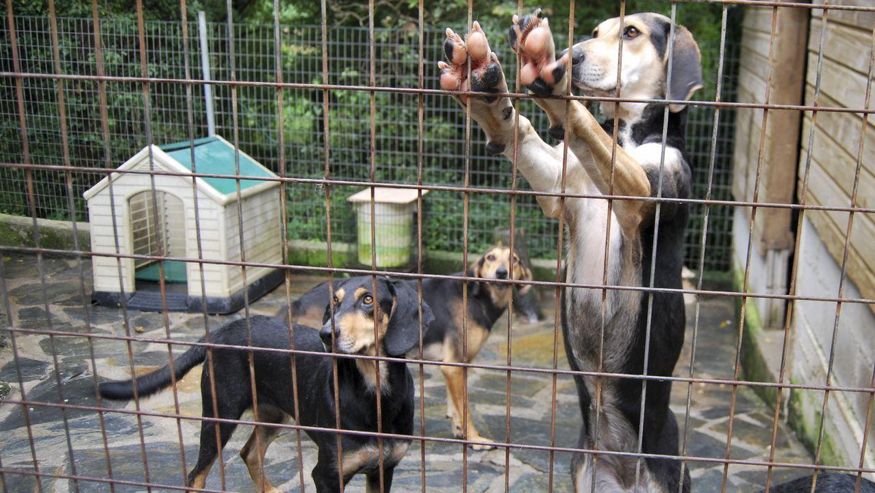 Galicia se marca el reto de frenar el alto índice de abandono de mascotas.