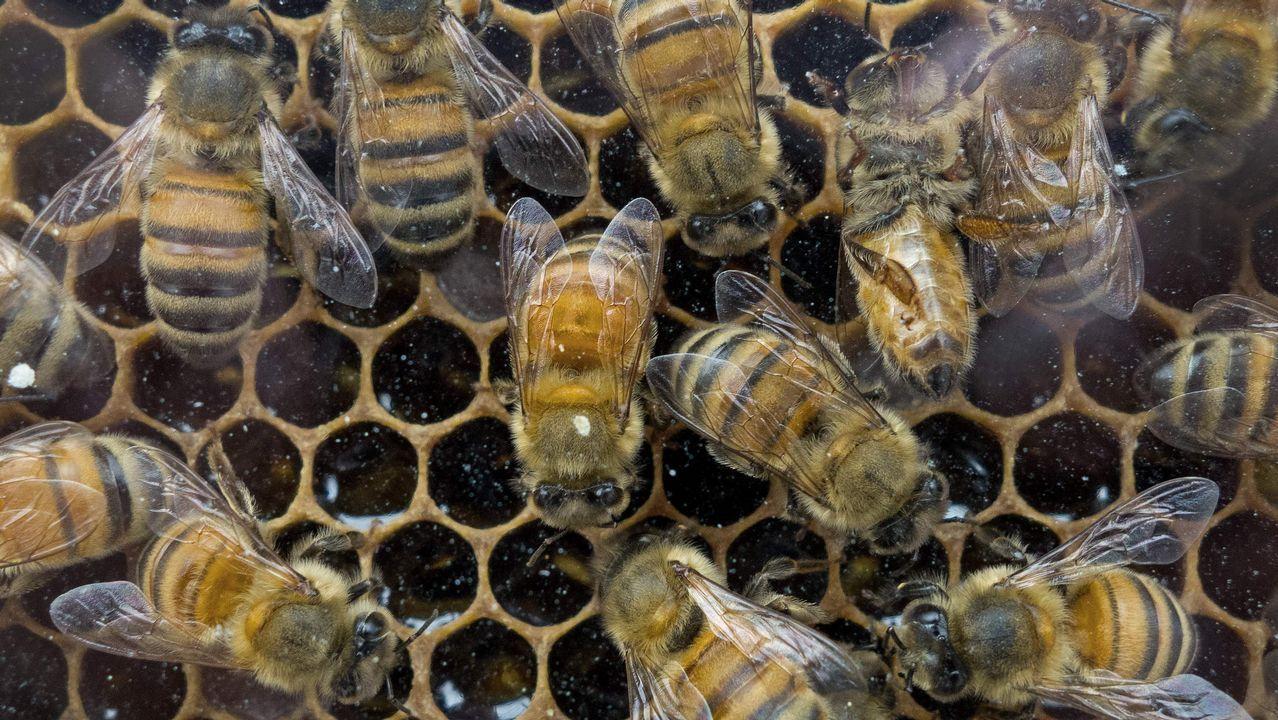 .Colmena de abejas en mercado de agricultores