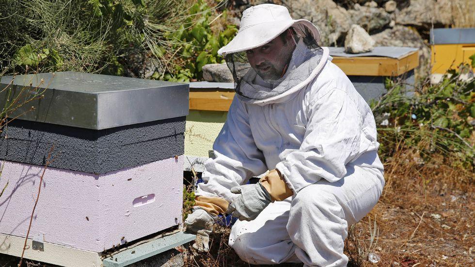 Unha das preguntas aos científicos de Prensa-Escuela era pola orixe do mel