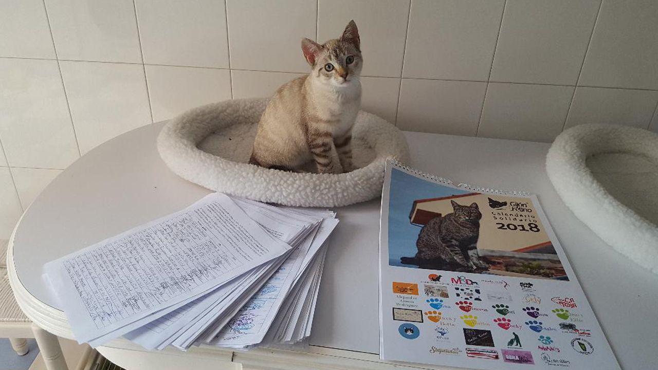 Lenon, un gato que busca hogar, ante las firmas recogidas