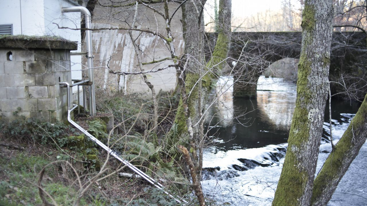 Jabalíes por la Fonte dos Ranchos en Lugo