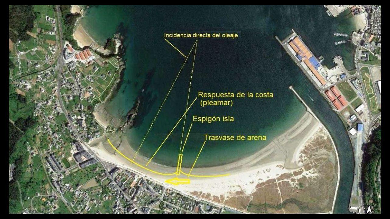 Especies halladas en la orillaen la comarca de Barbanza.Málaga
