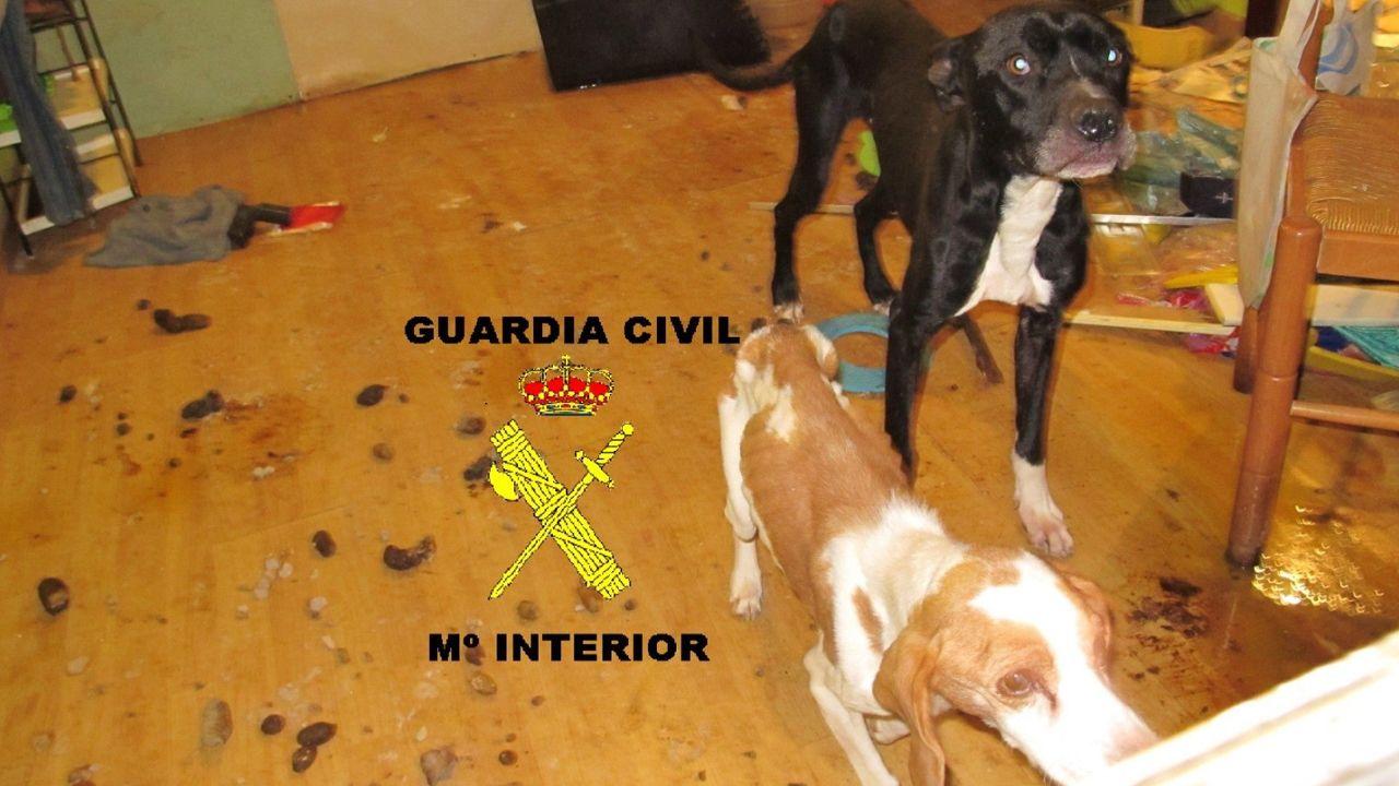 Perros abandonados en Moreda