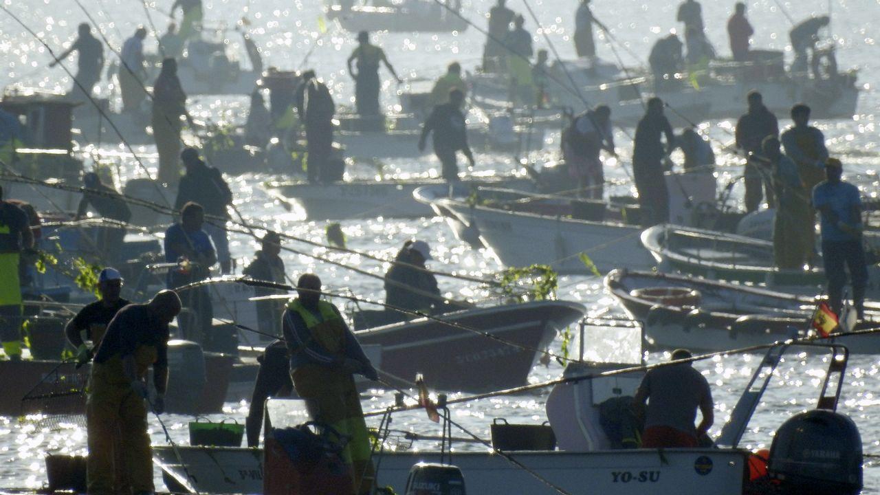 Centenares de embarcaciones en el primer día de la campaña marisquera de almeja y berberecho, en Noia