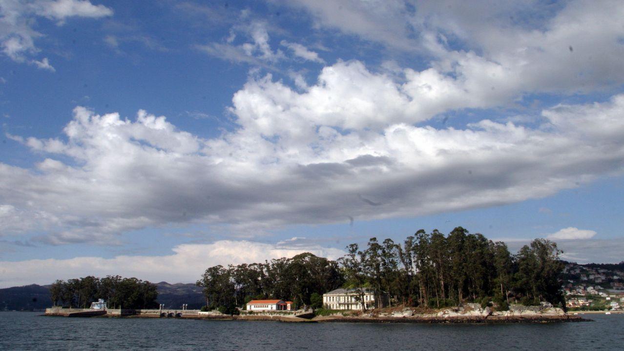 Así descubrieron en Vigo a la Phronima sedentaria, una extraña criatura del abismo marino