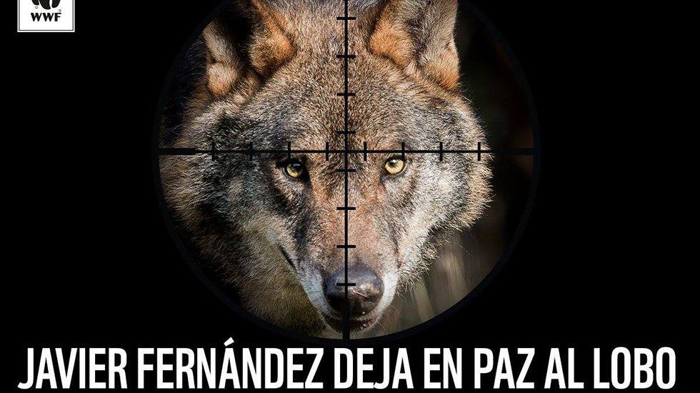 Palacio Flórez Estrada.WWF pide al presidente de Asturias que no permita la caza indiscriminada del lobo