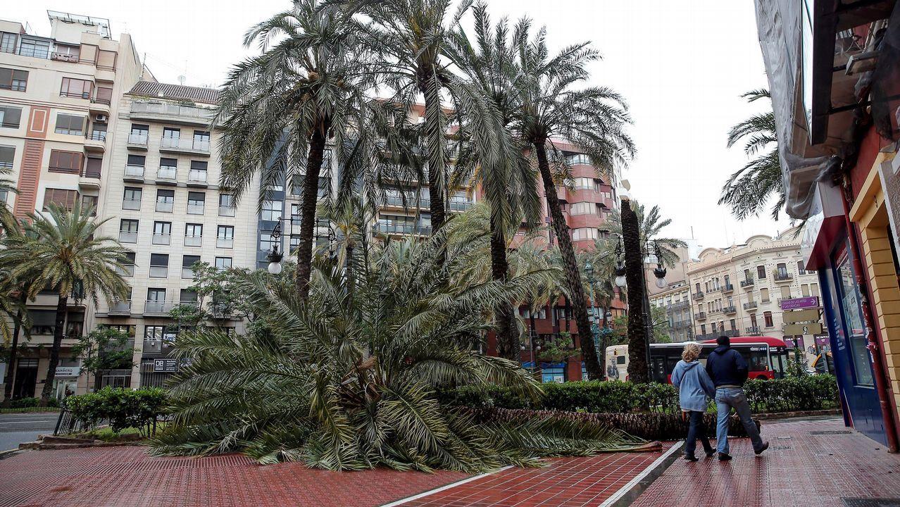 El fuerte viento derribó varios árboles en Valencia