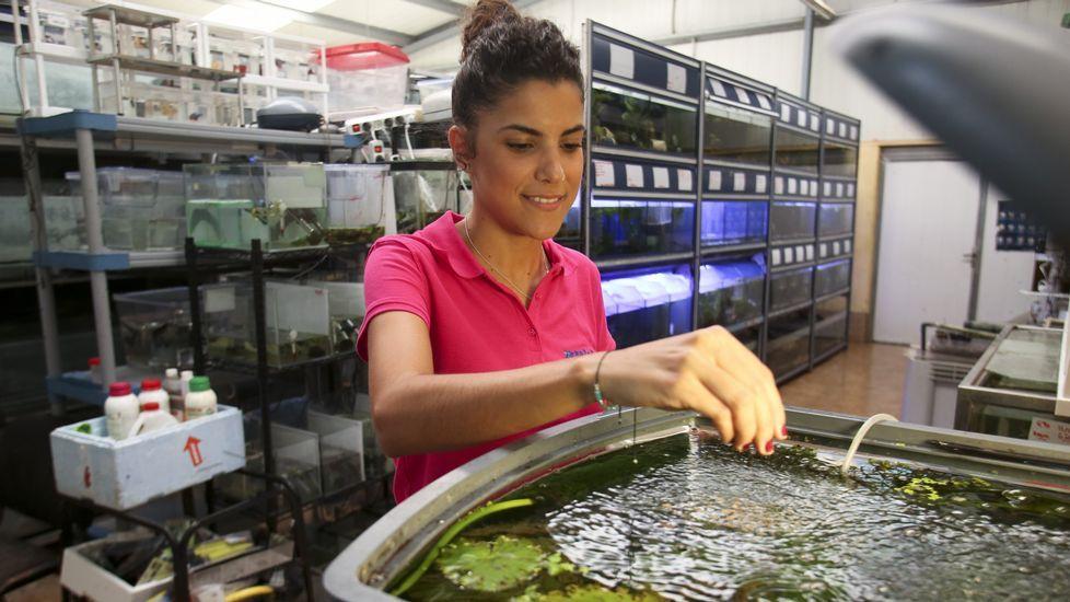 Xaraleira se lanza a la cr a de peces y gambas ornamentales for Cria de peces ornamentales