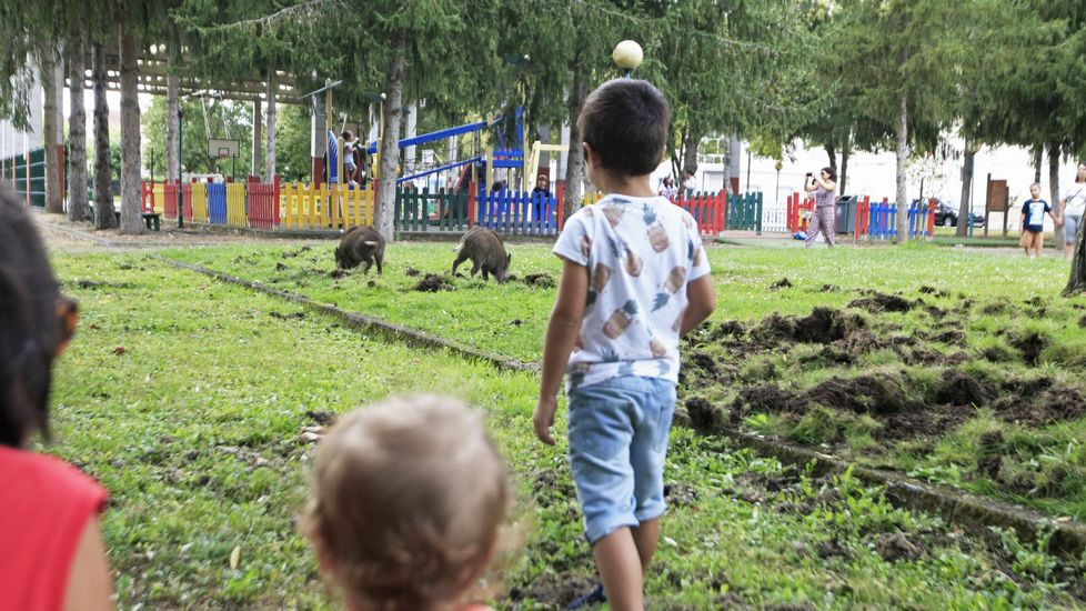 De noche jabalíes y de día caballos sueltos por Monforte.Unos niños miran cómo unos jabalíes buscan comida en el césped del parque Doutor López Suárez, en agosto del 2016