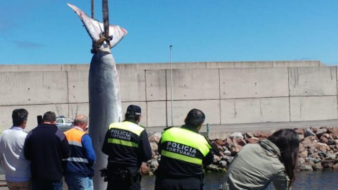 Retiran con una grúa el cetáceo varado en El Musel.El candidato del PP a la Alcaldía de Gijón, Alberto López-Asenjo charla con  el presidente de la Federación Asturiana de Empresarios (FADE), Belarmino Feito