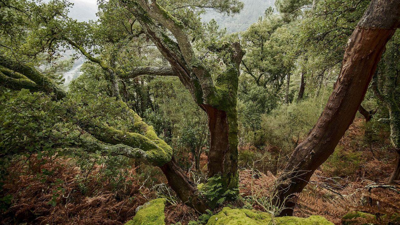 Bosques de la Ribeira Sacra y O Courel, patrimonio vivo.Asunción Rodríguez, de la bodega Crego e Monaguillo