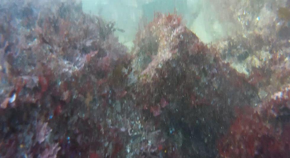 Imagen submarina de los cañones encontrados en los últimos meses en la ría ferrolana.
