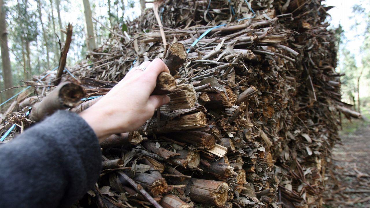 Greenalia está construyendo en Curtis la mayor planta de biomasa de España, que transformará restos forestales en electricidad