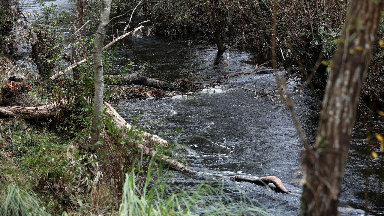 Alerta: árboles caídos y maleza están formando una presa natural en Landrove.Lara Álvarez