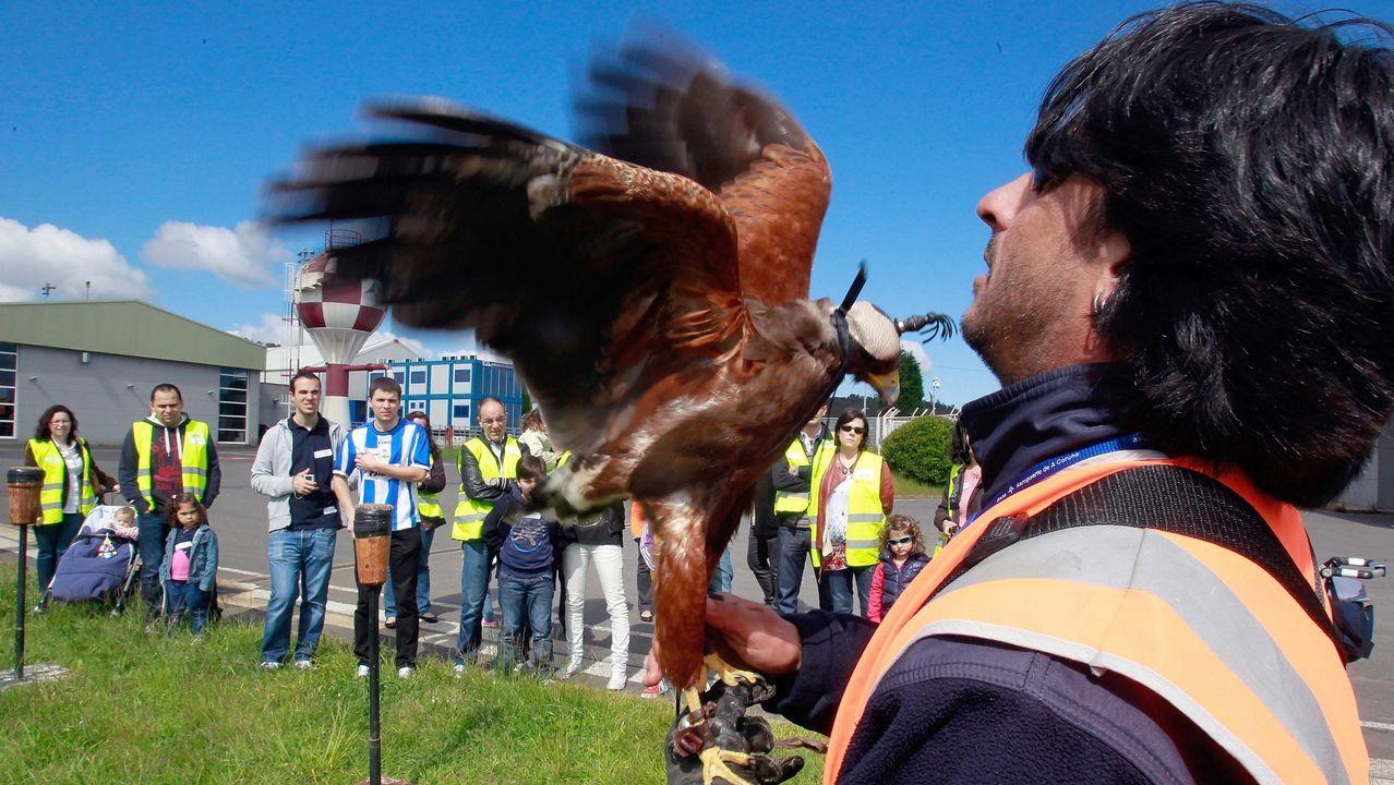 | EFE.Halcones usados en el aeropuerto de Alvedro para el control de aves