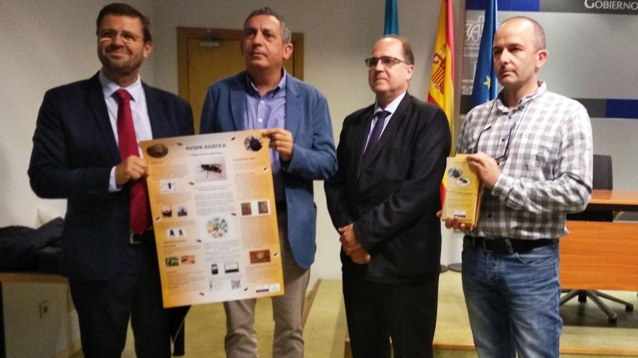 Acto de presentación de los folletos editados en el Plan de prevención y control de la avispa asiática