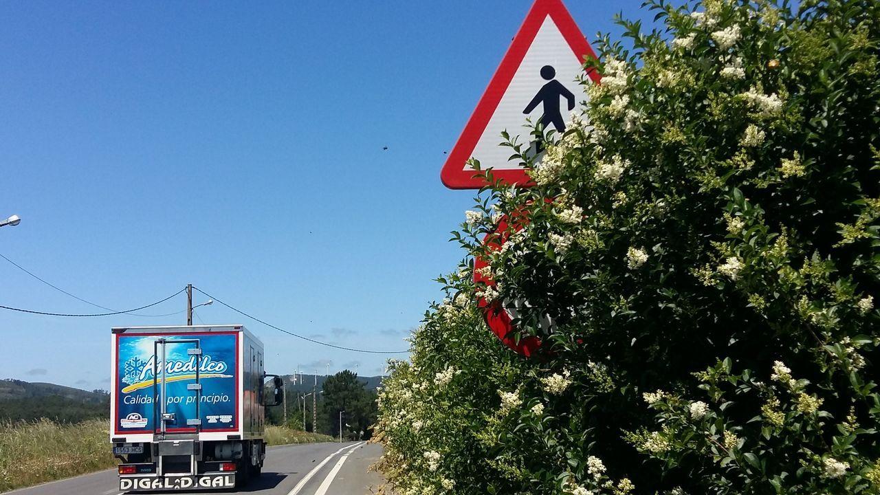 Chequeo a la maleza en las carreteras de Mazaricos