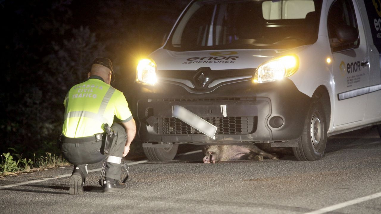Choque en Teo.Accidente causado por la irrupción de un jabalí en una carretera de Noia
