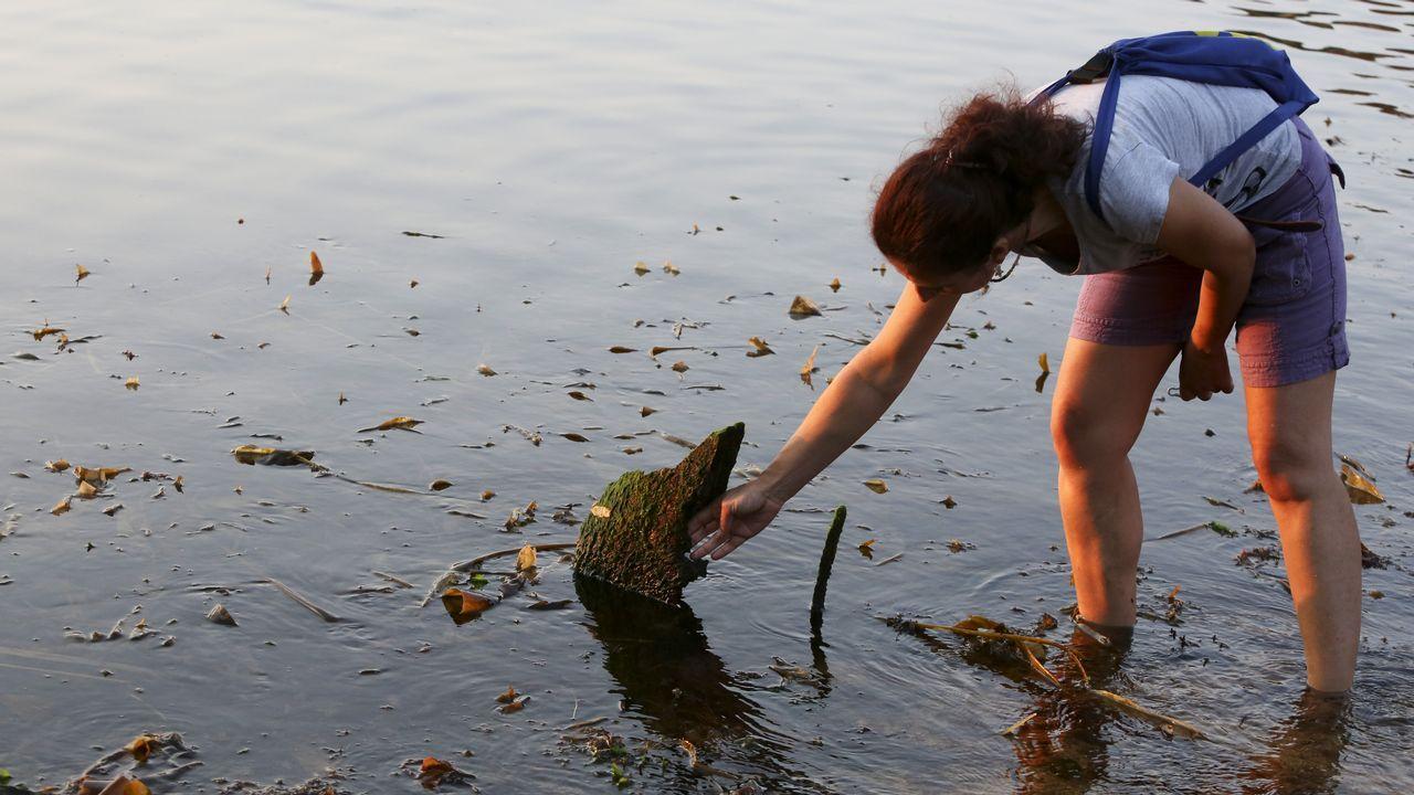 Mariscadoras recogiendo ostra japonesa en la ría de O Barqueiro