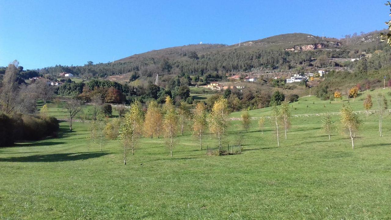«Choivas que só poden pasar unha vez en 500 anos».Monte Naranco, Oviedo