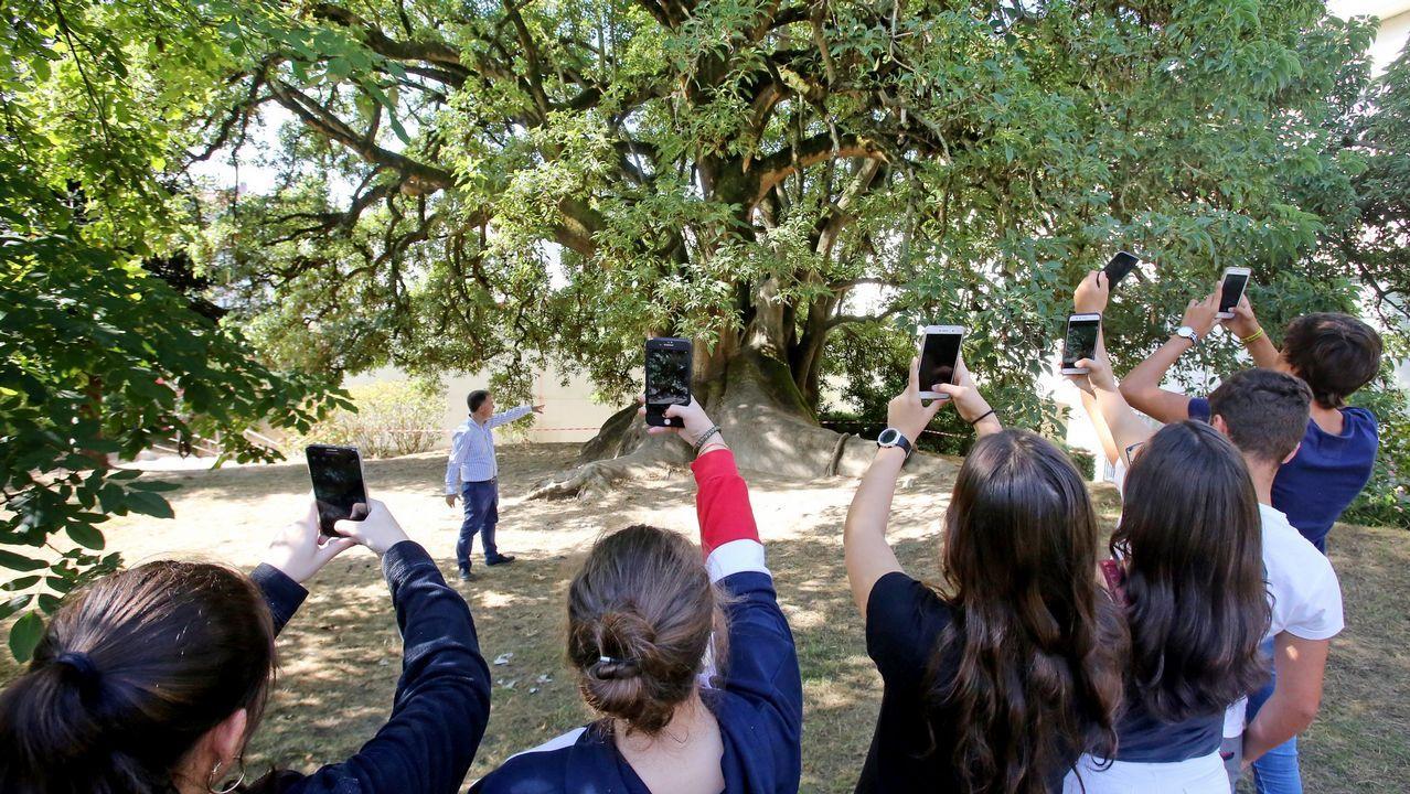En clase de Literatura, los alumnos del Bachillerato Internacional del IES do Castro de Vigo, salen al jardín