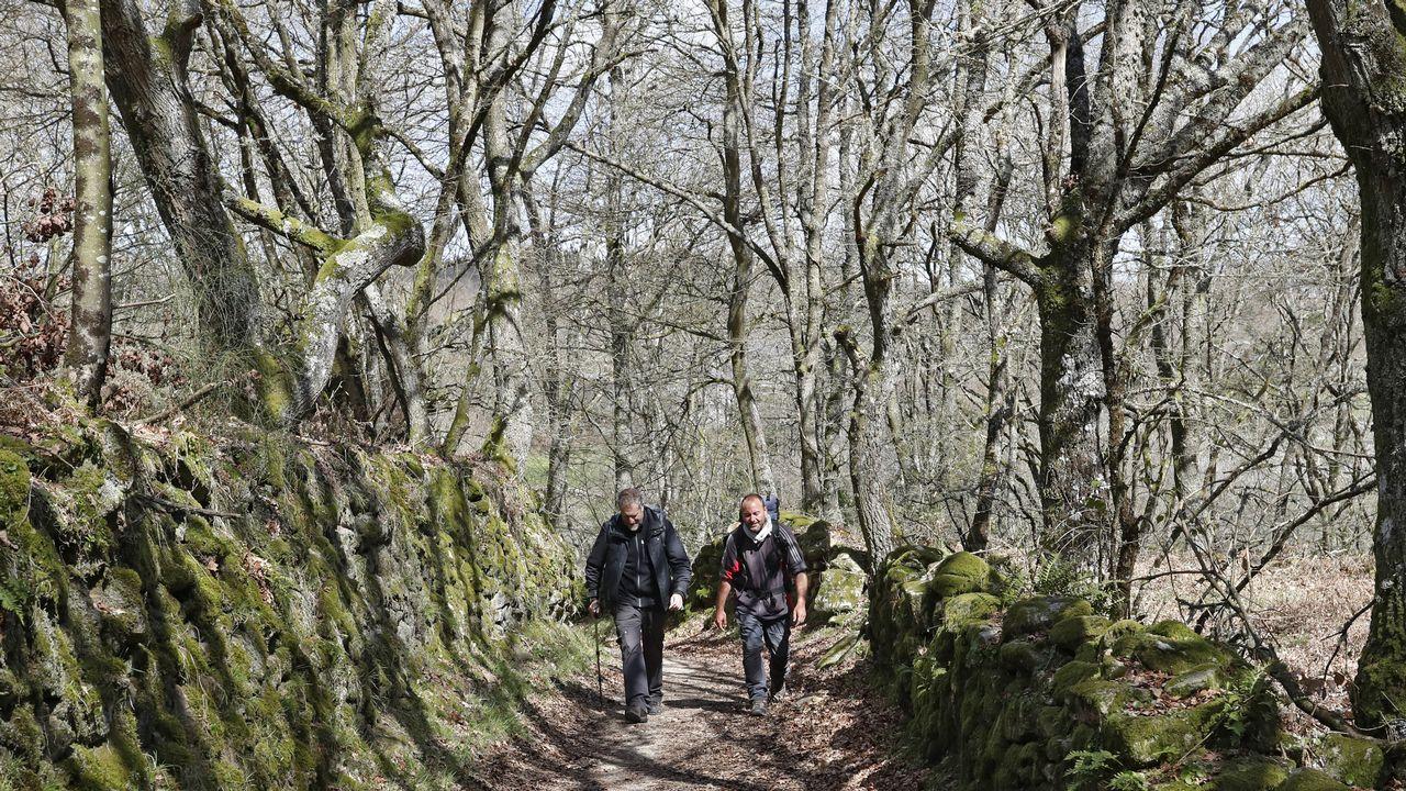 Un par de peregrinos recorren el Camino Francés a su paso por el concello de Sarria