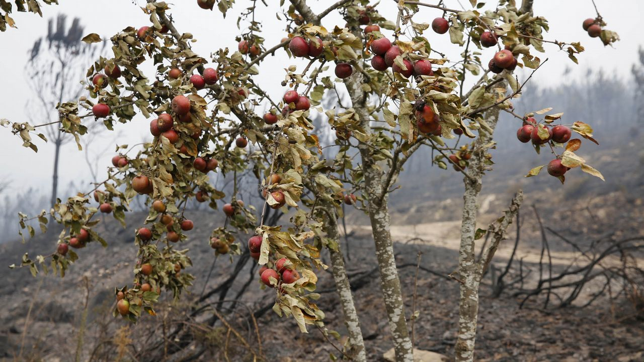 Incendio forestal con casas quemadas en Melón