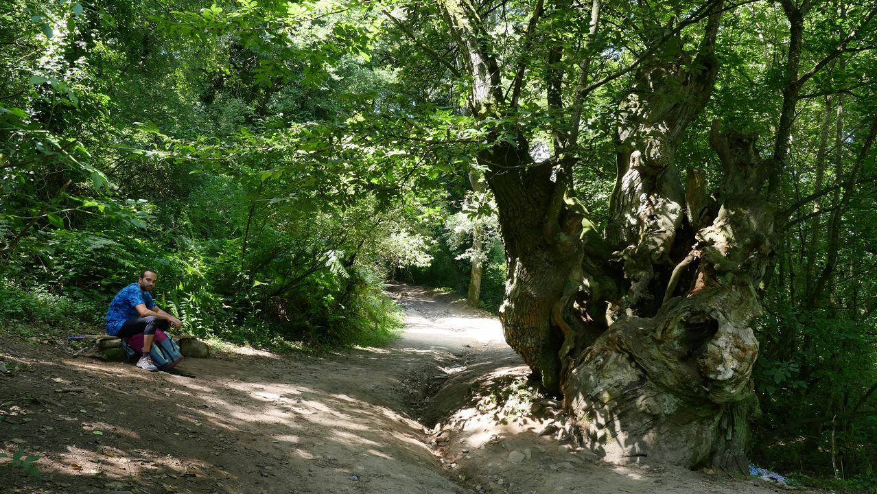 El alto en el Camino, a la sombra y al lado de árboles centenarios, se lleva mejor