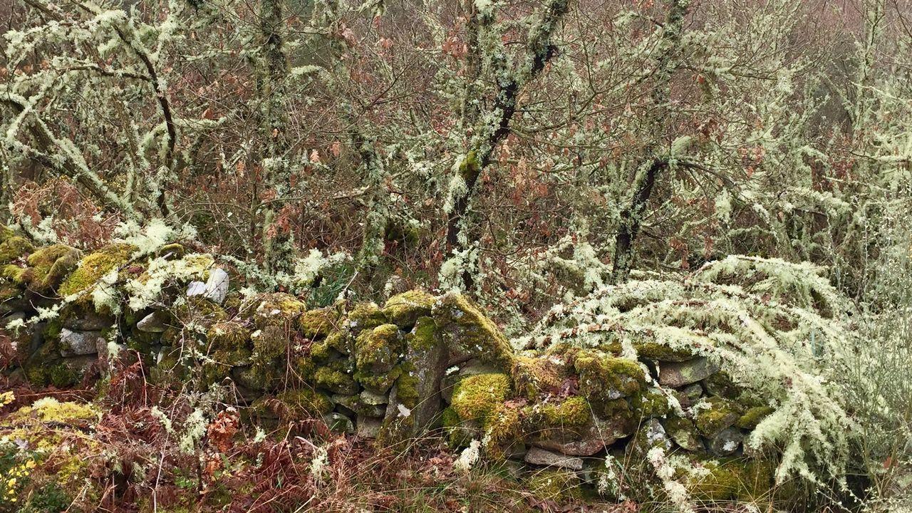Las piedras también aparecen decoradas por la vegetación