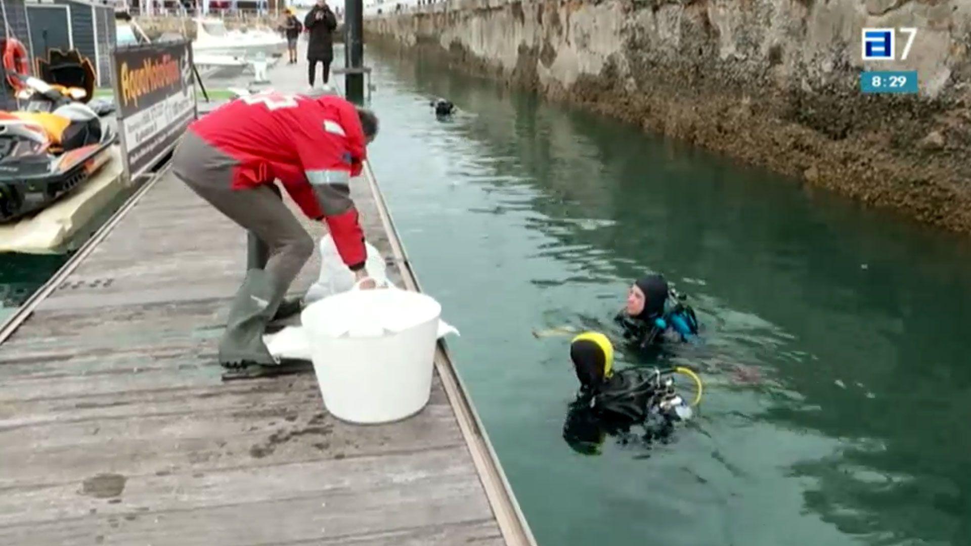 Voluntarios en un momento de la limpueza anual de los fondos del Puerto Deportivo de Gijón
