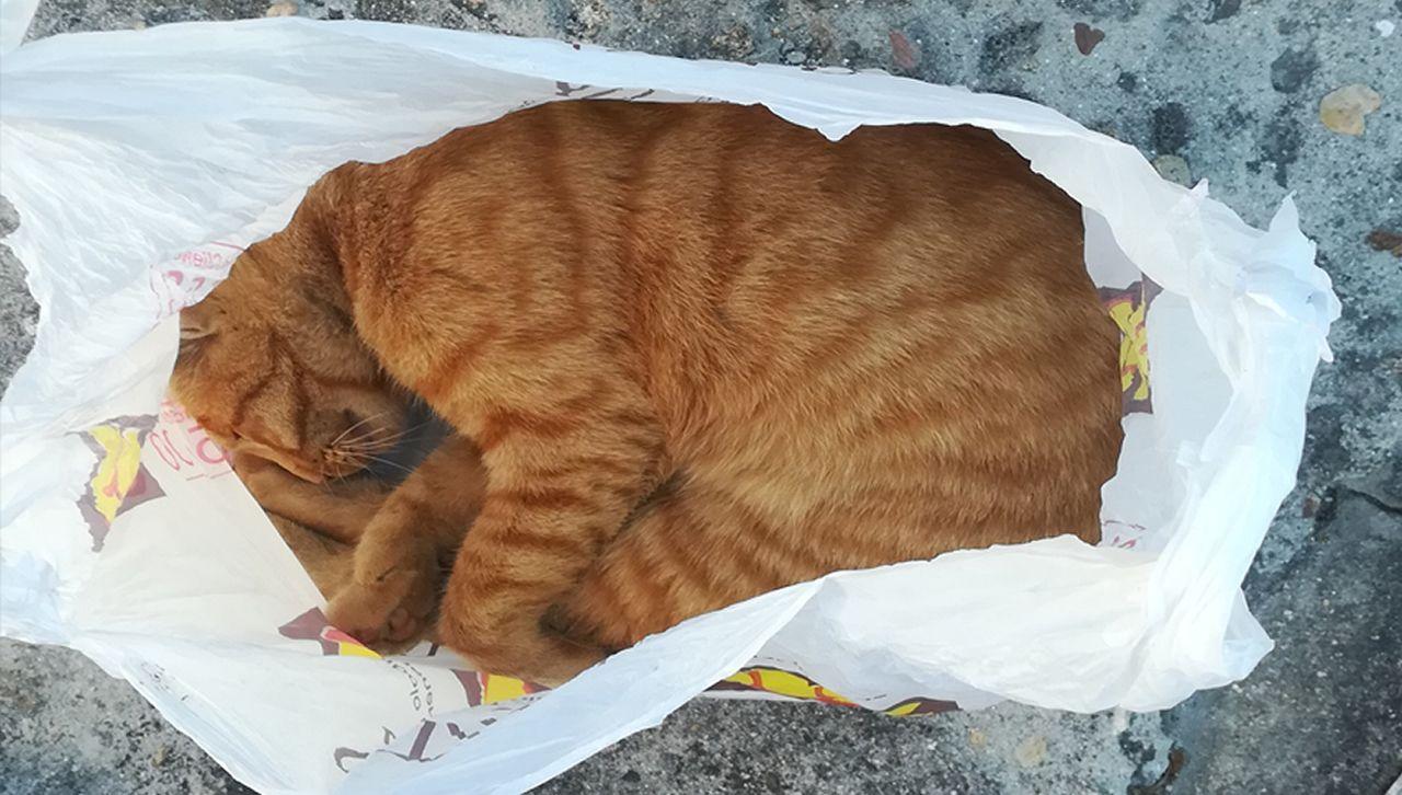 El matrimonio de Tomiño acusado de maltrato guarda al gato muerto en una bolsa después de ahorcarlo