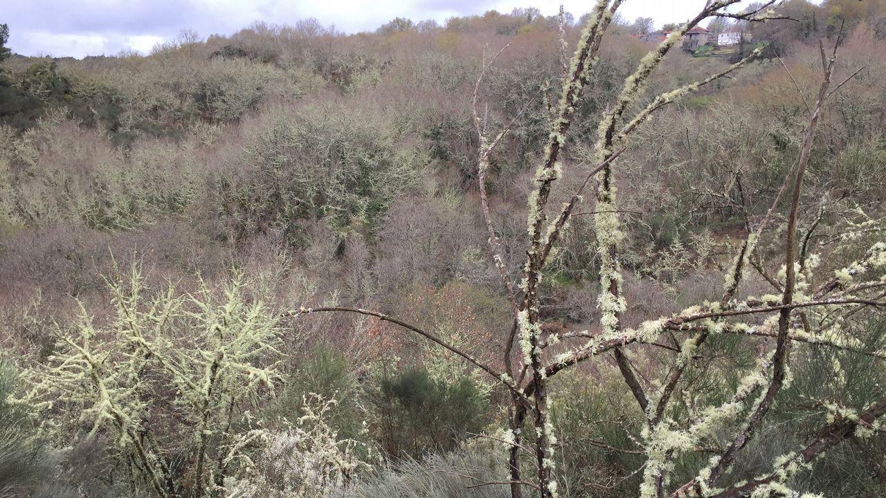 Este bosque de líquenes está situado en Xunqueira de Ambía