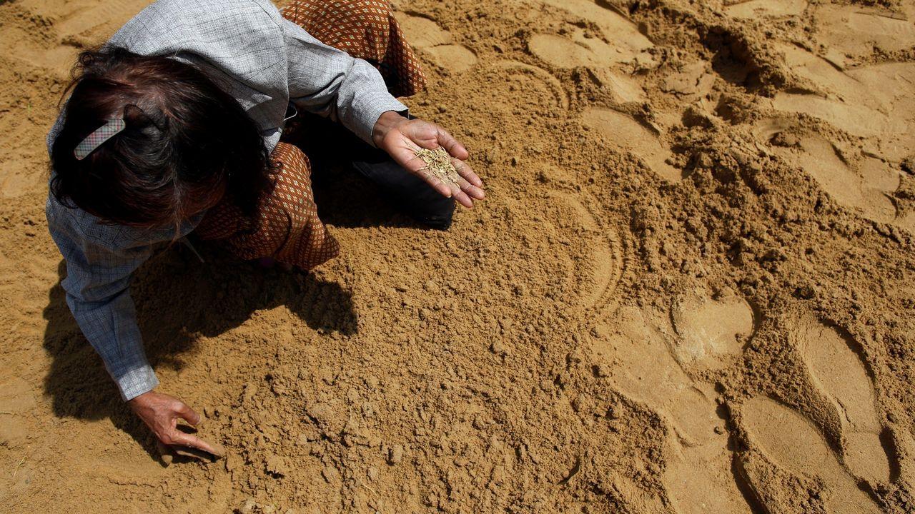 .Agricultores recogen semillas de arroz para que les den suerte, salud y cosechas abundantes durante la Ceremonia Real del Arado en Sanam Luang en Bangkok (Tailandia)