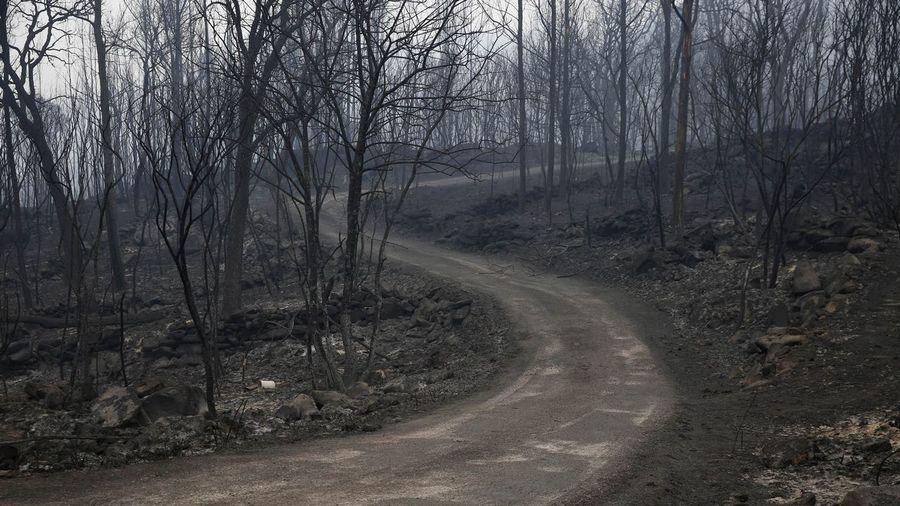 Galiza, incendios: La Xunta admite que en As Fragas do Eume han ardido 750 hectáreas.  - Página 4 O16O7187