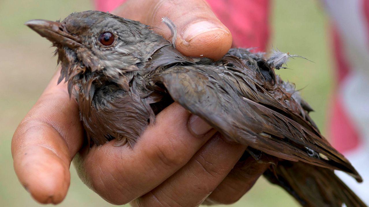 Un pájaro impregnado de restos minerales contaminantes