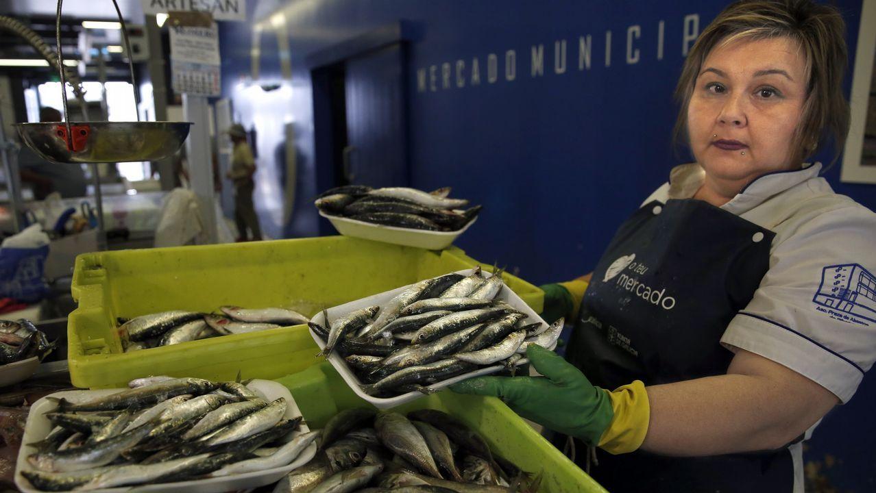 Tiburones en Galicia: «Son crías de quenlla, os adultos non se acercan á costa».Dársenas del puerto de Marín