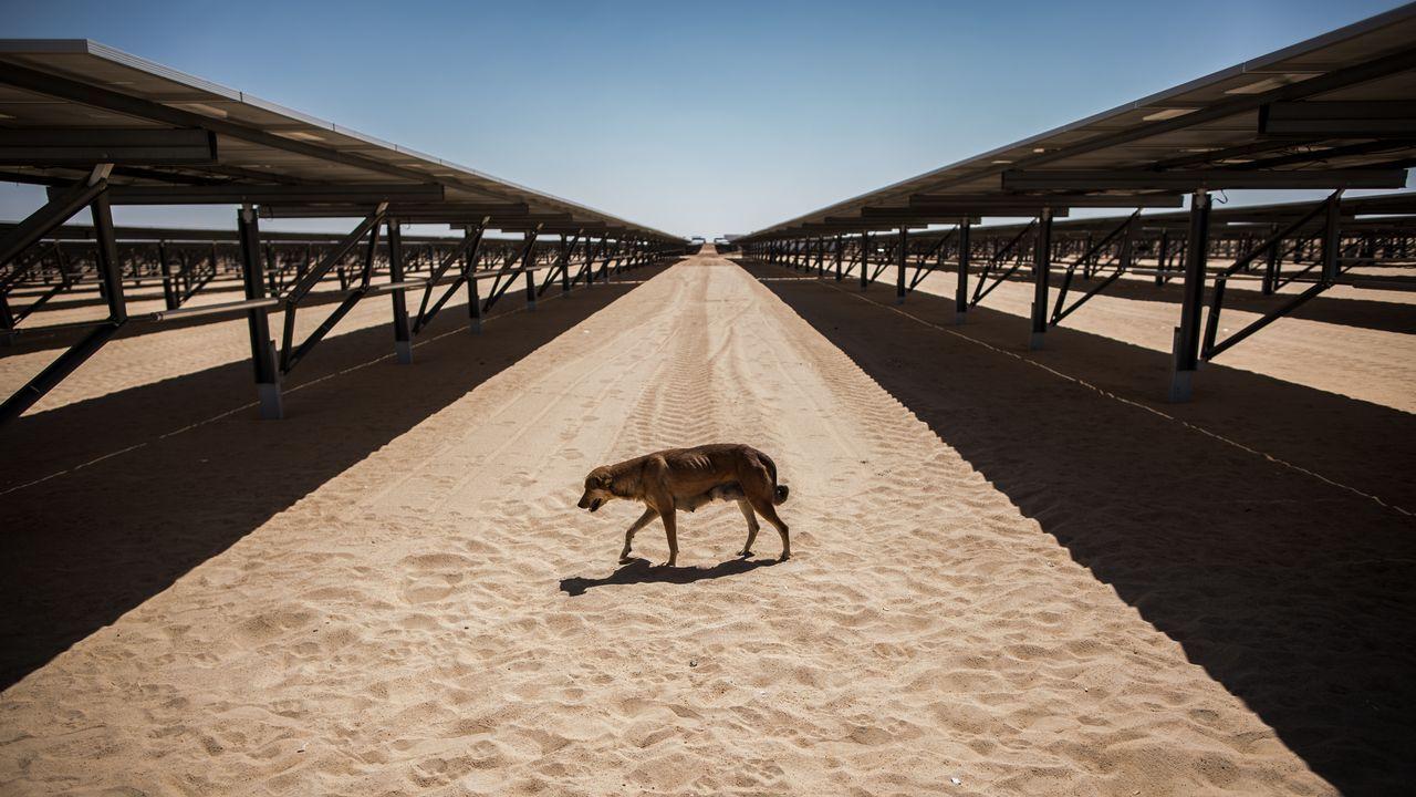 Un perro camina entre paneles solares durante la inauguración de una planta en Egipto